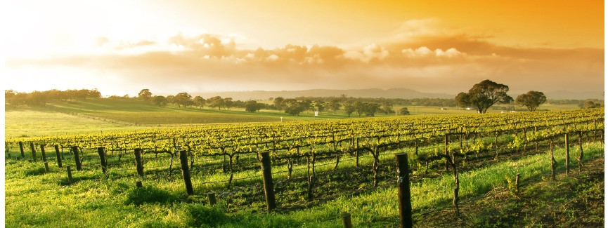 Wine Country Tours By Ny Wine Events